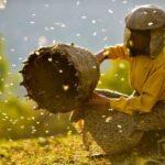 Honeyland - ein Dokumentarfilm