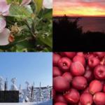 Vier Jahreszeiten Stream Nr.1 / Frühling
