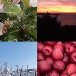 ClassiX mit<br>Vier Jahreszeiten Streams:<br>Herbststream